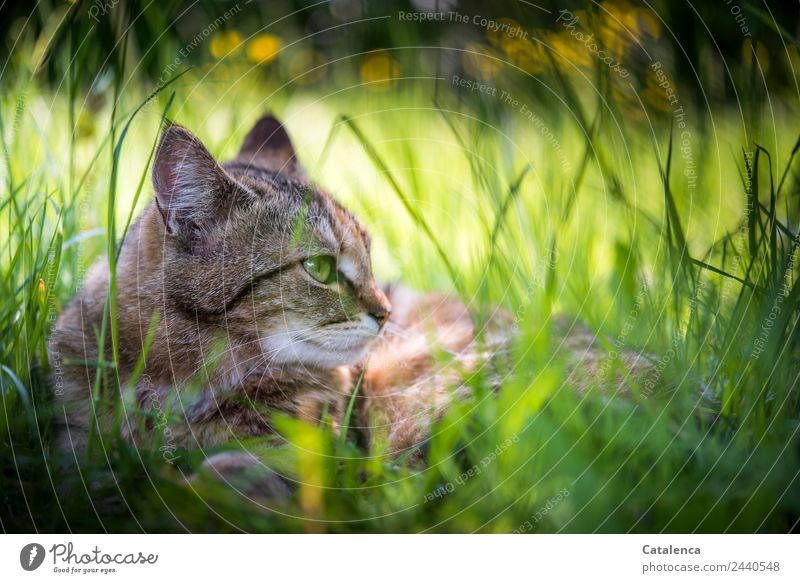 Cat Nature Summer Plant Beautiful Green Flower Relaxation Animal Leaf Calm Yellow Blossom Meadow Grass Brown