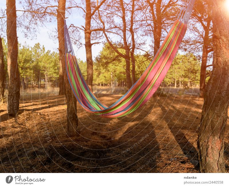 Empty textile hammock Relaxation Vacation & Travel Summer Nature Landscape Plant Tree Park Forest To enjoy Yellow Green Moody Serene Comfortable Colour Idyll