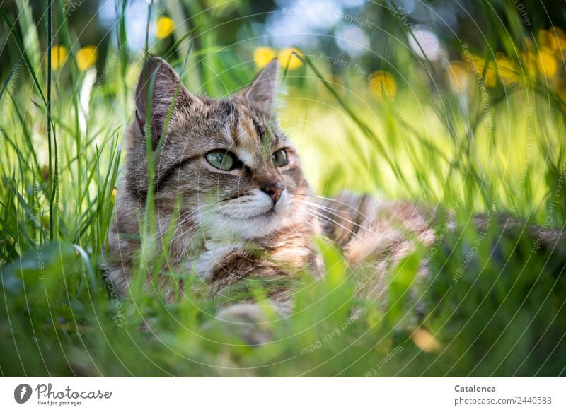Cat Nature Summer Plant Beautiful Green Flower Relaxation Animal Leaf Calm Yellow Blossom Grass Garden Brown