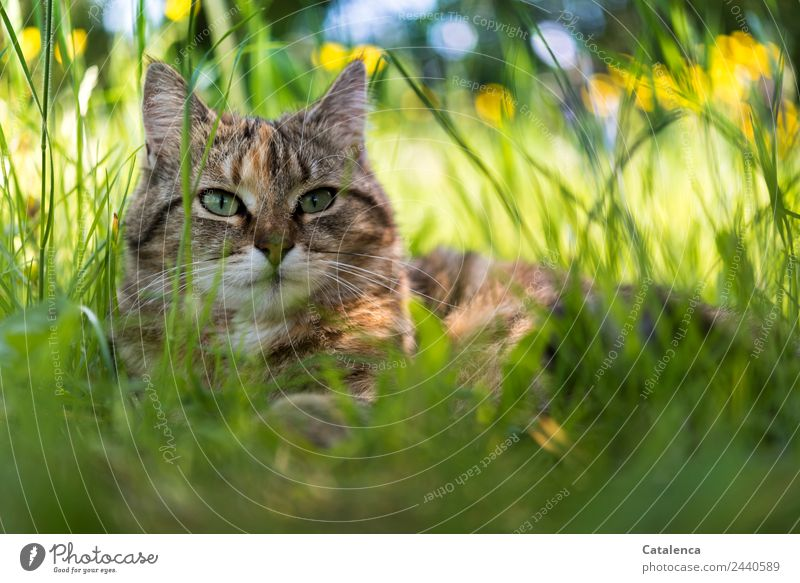 A little cat in the high grass Nature Plant Animal Sky Summer Beautiful weather Flower Grass Leaf Blossom Wild plant Marsh marigold Meadow Field Cat 1 Observe