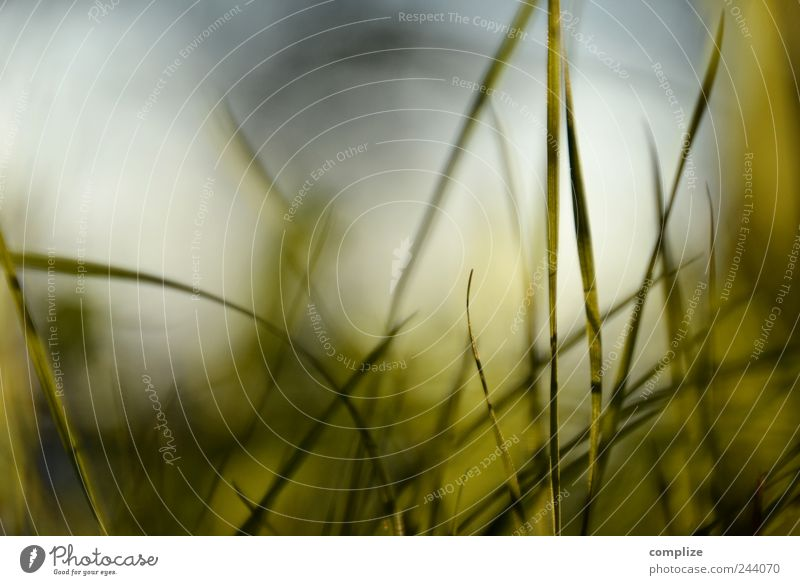blades of grass Relaxation Calm Summer Environment Nature Plant Sky Grass Ornament Line Blue Idyll Innovative Background picture Blade of grass Meadow Design