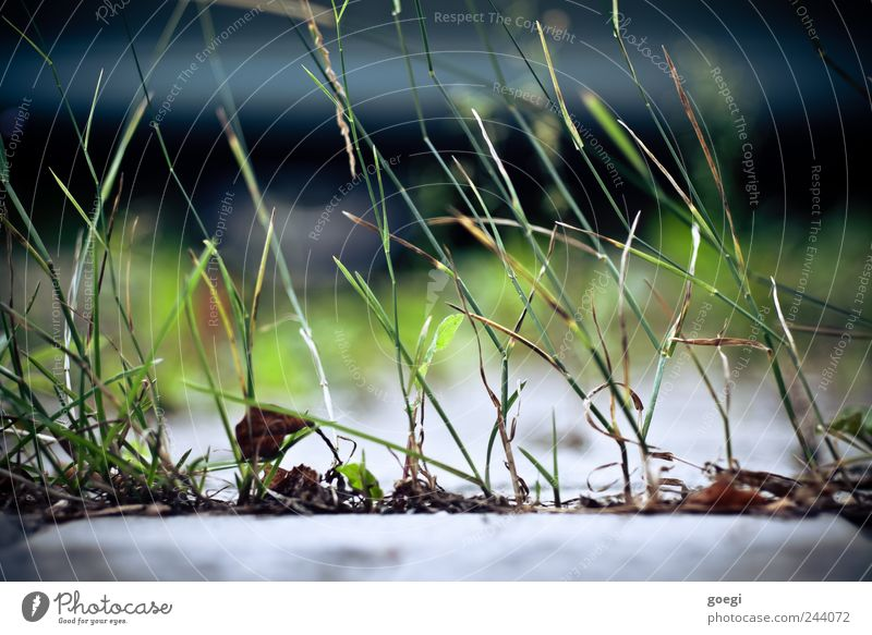 two-dimensional meadow Environment Nature Plant Grass Blade of grass Green Colour photo Deserted Day
