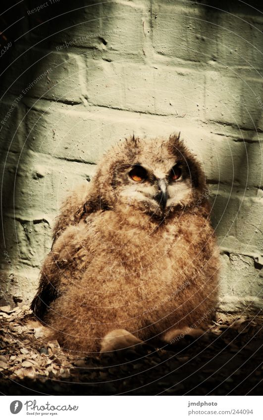 Nature Calm Animal Loneliness Contentment Bird Baby animal Sit Wait Wild Wild animal Wing Feather Observe Curiosity Pelt