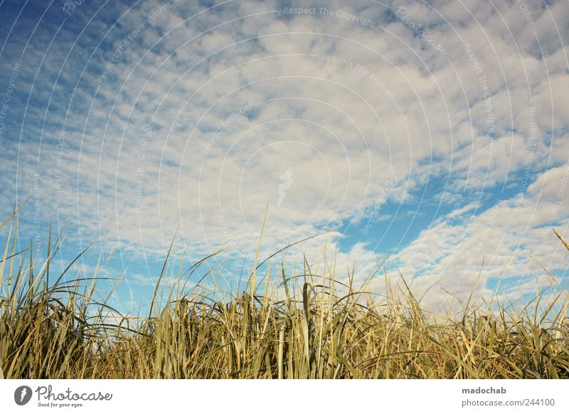 The grass is high, you can hardly see. Harmonious Well-being Contentment Senses Relaxation Calm Nature Landscape Plant Sky Clouds Summer Weather