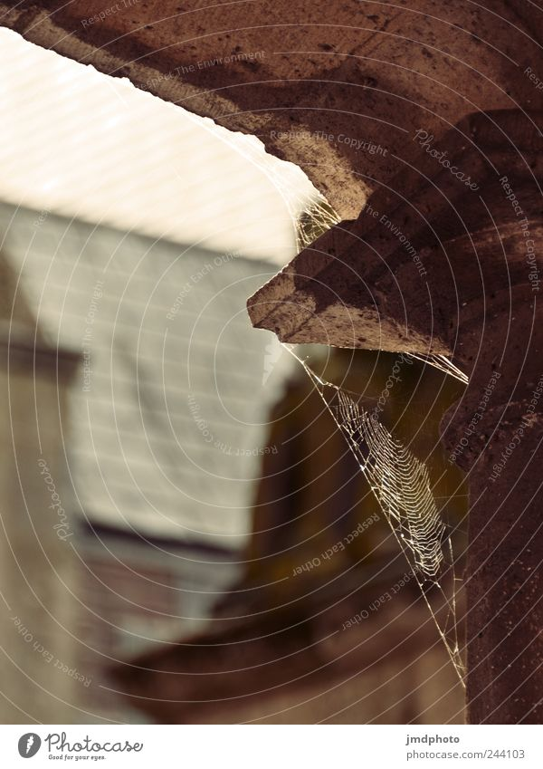 spider's web Nature House (Residential Structure) Church Castle Manmade structures Building Architecture Hang Dirty Thin Free Natural Patient Calm Appetite Fear