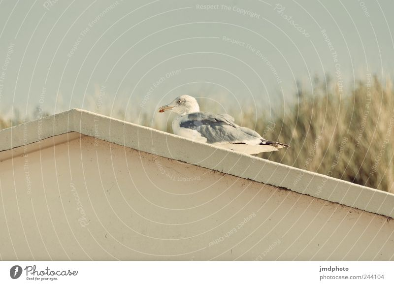seagull Trip Summer vacation Ocean Environment Nature Plant Animal Grass Coast House (Residential Structure) Wild animal Bird Wing 1 Lie Sit Free Happiness
