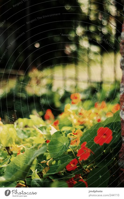 Nature Tree Flower Plant Summer Joy Leaf Animal Meadow Blossom Grass Garden Happy Park Landscape Contentment