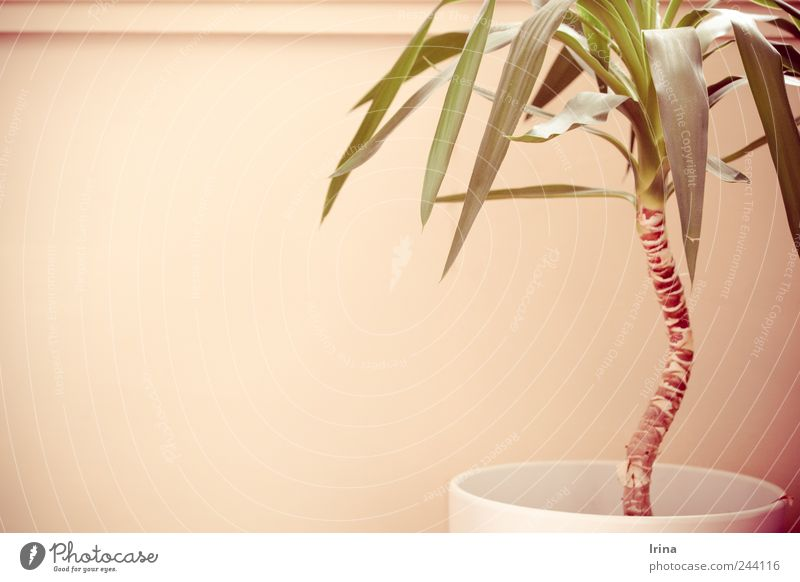 kitchen stories | tropical Plant Foliage plant Pot plant Palm tree Cupboard Kitsch Summer House location Houseplant Experimental Deserted Copy Space left