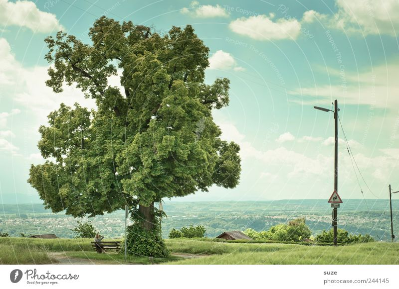 Nature Sky Tree Green Calm Clouds Meadow Landscape Environment Growth Break Bench Natural Idyll Electricity pylon Treetop
