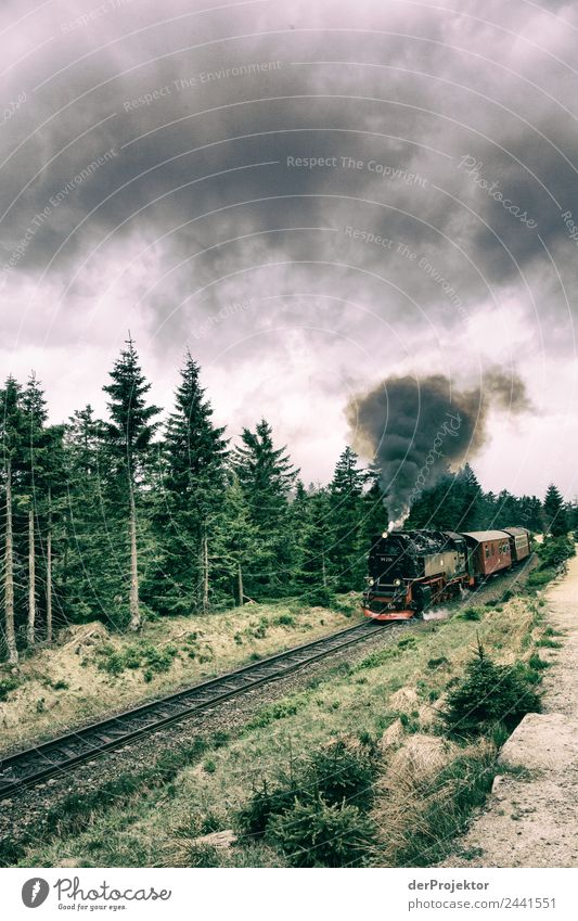 The Brockenbahn fights its way to the top Vacation & Travel Tourism Trip Adventure Far-off places Freedom Hiking Environment Nature Plant Animal Summer