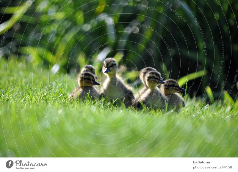 Nature Plant Summer Animal Meadow Spring Together Bird Baby animal Free Wild animal Bushes Group of animals Observe Curiosity Lakeside
