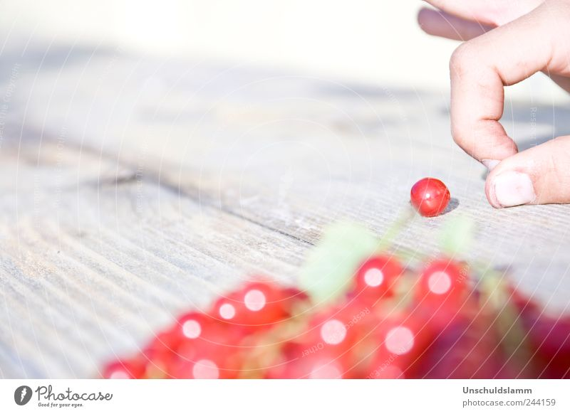 Red Summer Joy Life Playing Garden Wood Bright Funny Fruit Fingers Happiness Sweet Target Leisure and hobbies Joie de vivre (Vitality)