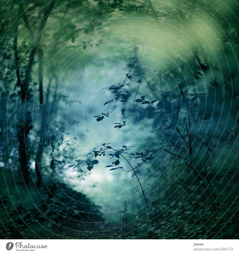 At the lake Nature Water Summer Plant Tree Park Lakeside Blue Green Black Romance Calm Dream Idyll Curlicue Twigs and branches Leaf Forest Clearing Colour photo
