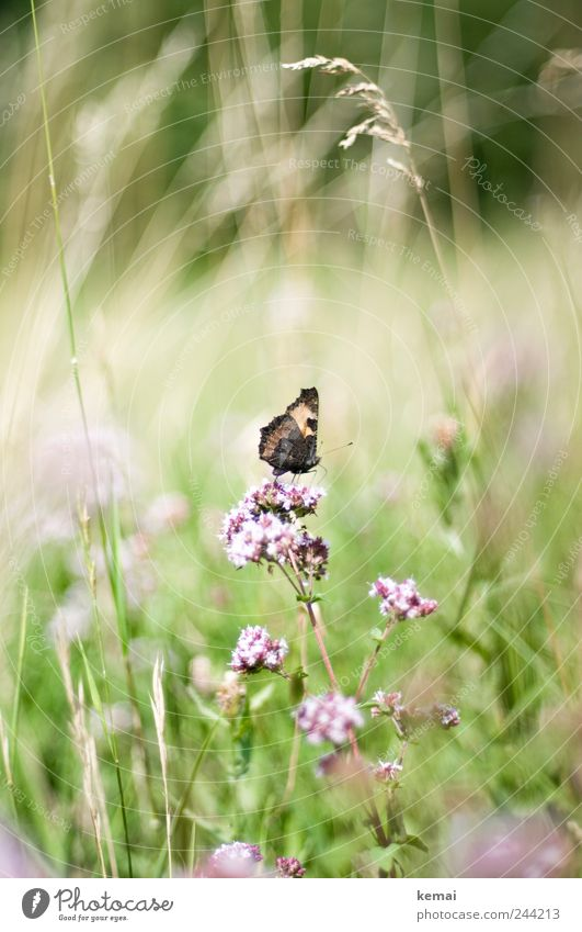 Nature Green Plant Summer Flower Animal Meadow Environment Grass Blossom Bright Pink Sit Wild animal Insect Blossoming