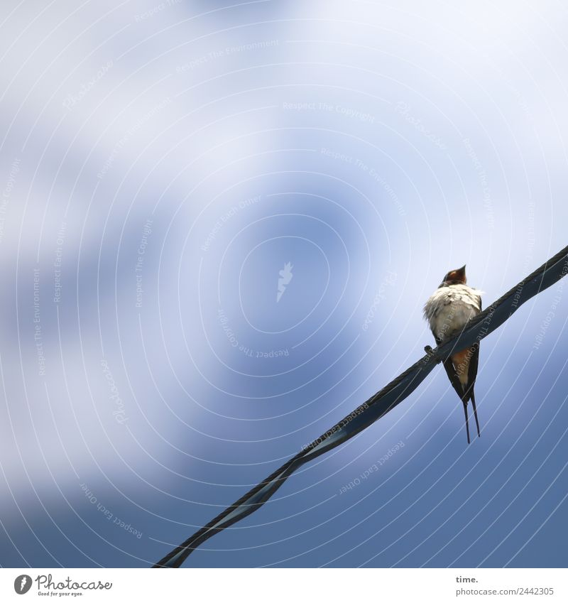 Beautiful Animal Natural Time Small Bird Wild animal Energy industry Technology Sit Observe Curiosity Discover Steel cable Ease Interest