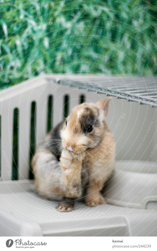 Helmut at the pedicure Grass Animal Pet Animal face Hare & Rabbit & Bunny pygmy hare Pygmy rabbit Legs Animal foot hind leg Eyes 1 Baby animal Cage Cleaning Sit