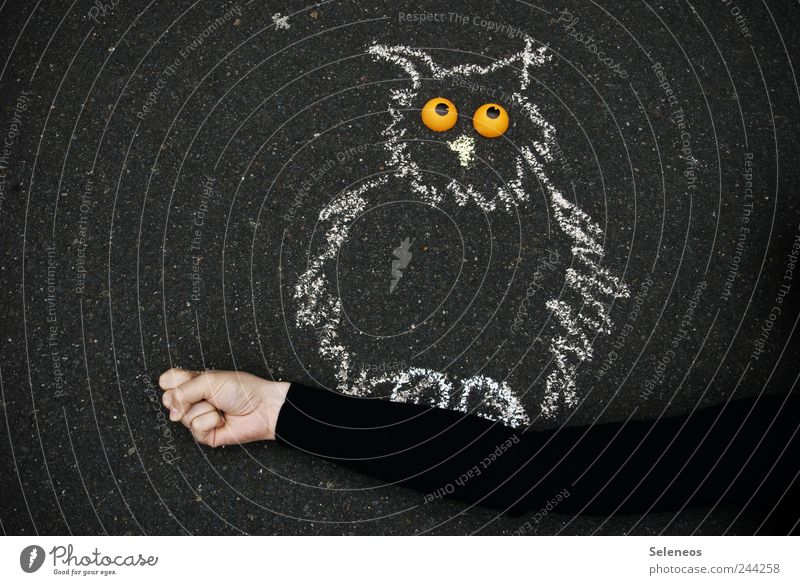 Human being Hand Eyes Animal Street Playing Stone Arm Leisure and hobbies To hold on Draw Sweater Smooth Street art Bird Owl birds
