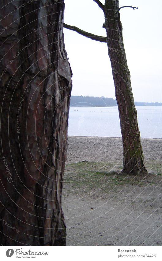 Nature Tree Beach Clouds Forest Lake Sand Graffiti Coast Tree bark Pine