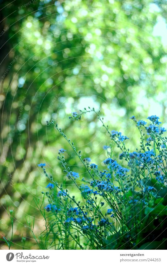 last twitches of summer Fragrance Living or residing Flat (apartment) Garden Gardening Environment Nature Plant Spring Summer Tree Bushes Blossom Foliage plant