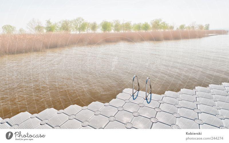 season start Tourism Swimming pool Water Common Reed Lakeside Lake Neusiedl Rust Burgenland Pontoon Plastic Swimming & Bathing To enjoy Esthetic Friendliness