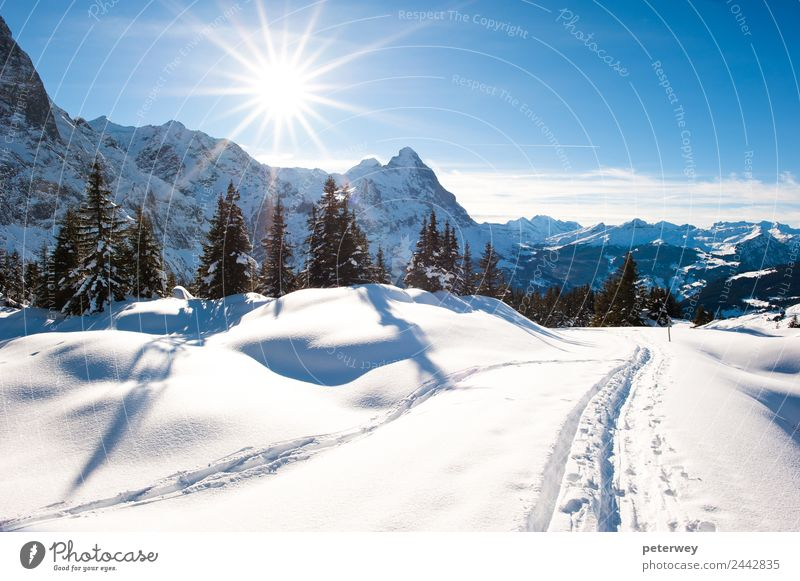 Panoramic scenery above Grindelwald Trip Winter Mountain Hiking Nature Landscape Snow Forest Alps Blue White Eiger hiking trail panorama panoramic scenic sky