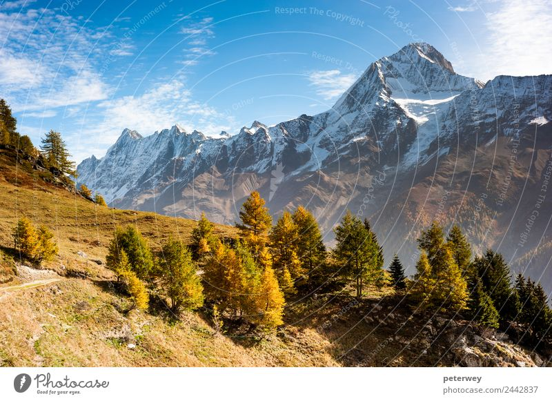Bietschorn mountain peak in autumn Hiking Nature Alps Brown Gold Alpine case grass hiking trail landscape leekeralp Lötschental meadow mountain range october