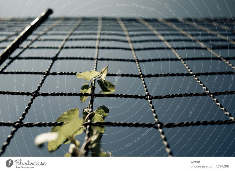 Nature Sky Plant Leaf Metal Environment Growth Fence Wire Foliage plant Distorted Creeper Fence post Wire fence