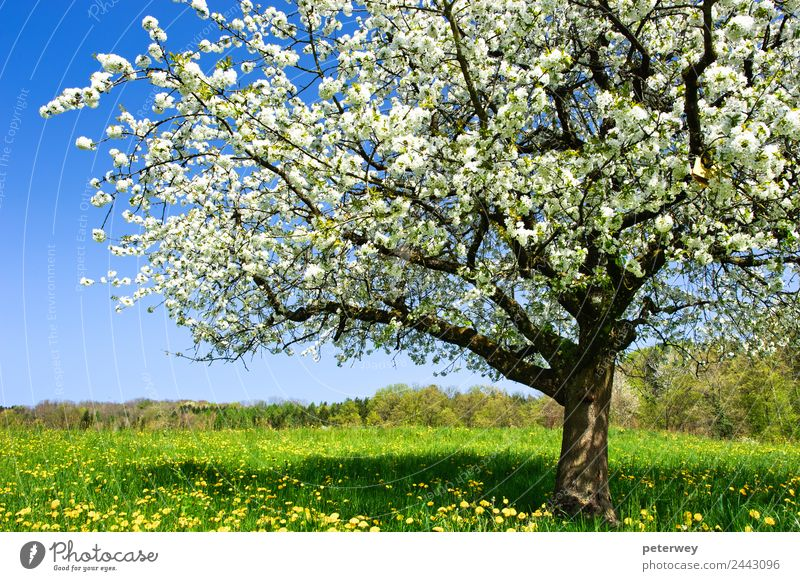 Nature Blue Plant Colour Beautiful Green White Tree Flower Yellow Background picture Spring Grass Brown Jump Field