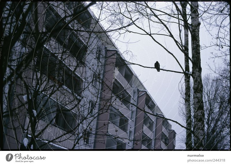 Tree Loneliness House (Residential Structure) Dark Environment Moody Art Bird Flat (apartment) Sit Facade Fog High-rise Climate Lifestyle Gloomy