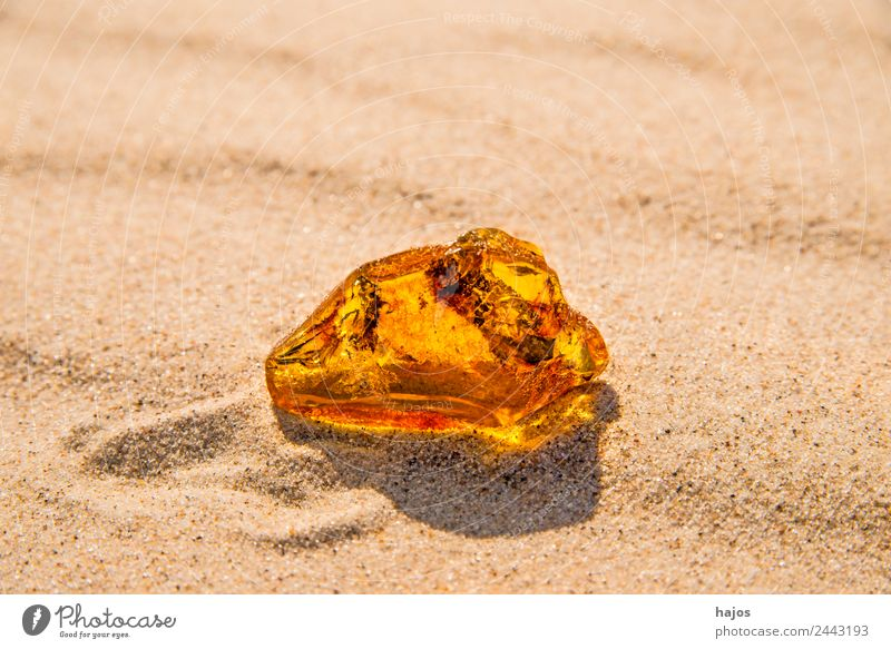 Amber at the Baltic Sea beach Beach Nature Sand Stone Ornament Old Yellow Brilliant luminescent Poland find full of value Precious Resin healing stone