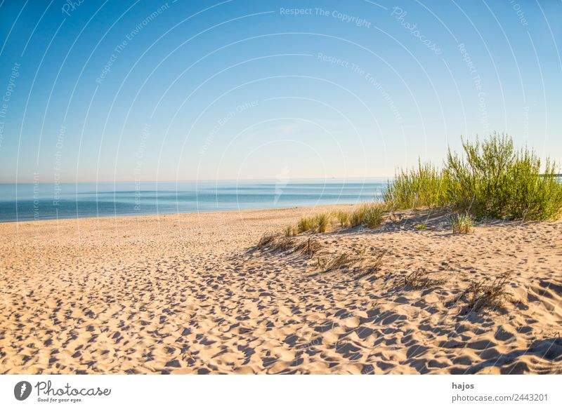 Beach at the Polish Baltic Sea coast Environment Maritime Idyll Sandy beach marram grass Ocean Blue Sky Empty Lonely Wild Deserted Vacation & Travel Relaxation