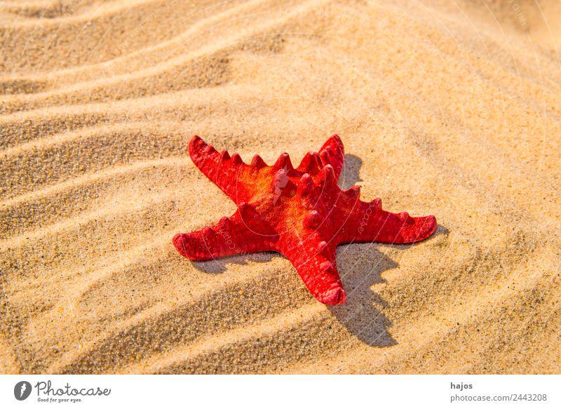 Starfish on a beach Vacation & Travel Summer Beach Sand Animal 1 Red Bright Sandy beach Sun Deserted Copy Space Vacation photo Caribbean Colour photo