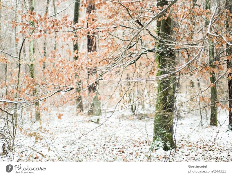 Nature Tree Winter Leaf Forest Cold Snow Landscape Ice Environment Frost Romance Branch Tree trunk Woodground Winter forest