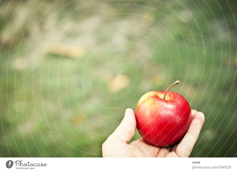 aha effect Food Fruit Apple Nutrition Breakfast Picnic Organic produce Vegetarian diet Diet Hand Autumn Meadow To hold on Green Red Awareness Tree of knowledge