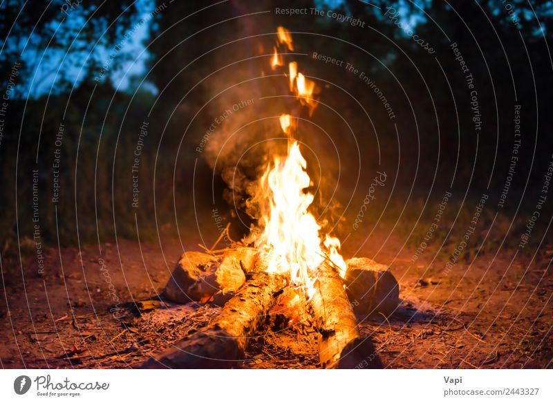 Bonfire in forest Nature Vacation & Travel Summer Blue Water Green Landscape White Tree Red Joy Forest Dark Black Yellow Wood