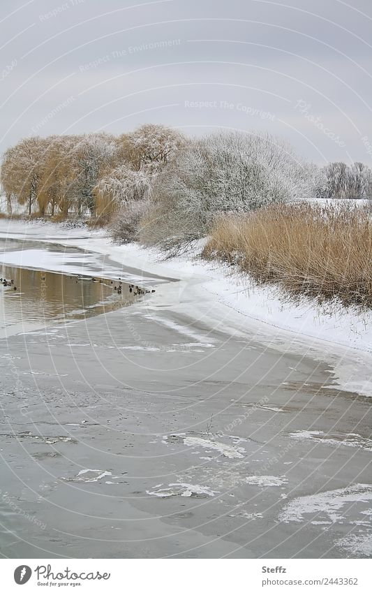 A winter day Environment Nature Landscape Winter Weather Ice Frost Snow Tree Pond Shore of a pond Snowscape Duck birds Group of animals Cold Gray Calm