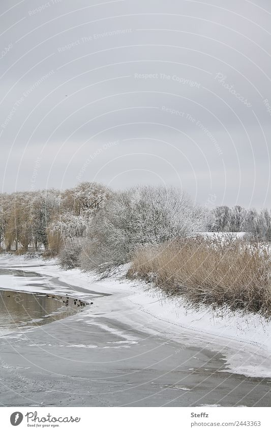 Nature Landscape Tree Calm Winter Cold Snow Gray Ice Weather Group of animals Climate Frost Frozen Pond Duck