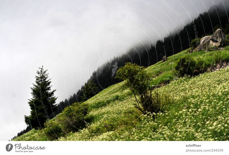 Horizon, oblique Nature Landscape Clouds Summer Bad weather Fog Rain Tree Flower Grass Bushes Meadow Forest Hill Alps Mountain Green Steep Flower meadow