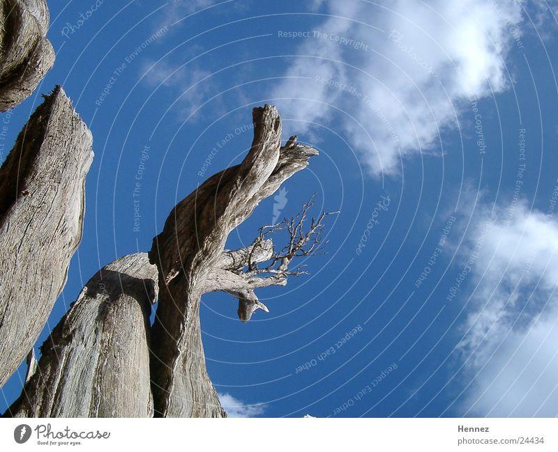 Sky Tree Blue Clouds Death