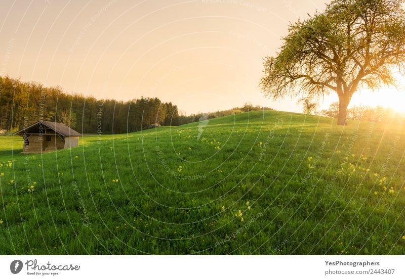 Sunset over a barn and spring meadow Beautiful Tourism Summer Nature Landscape Grass Meadow Forest Hill Optimism Loneliness Idyll Germany Atmosphere big tree