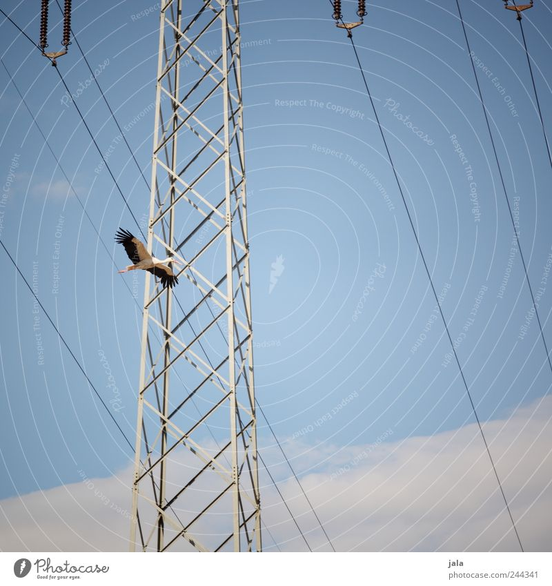 high achiever Nature Sky Clouds Electricity pylon Animal Wild animal Bird Stork 1 Flying Colour photo Exterior shot Deserted Neutral Background Day