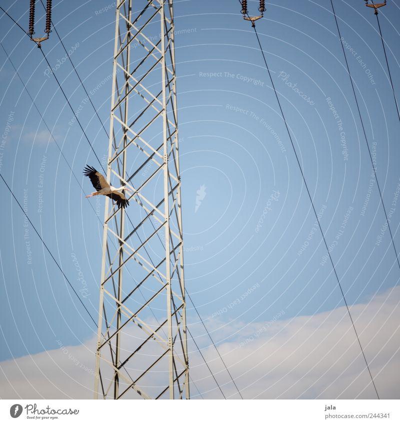 Nature Sky Clouds Animal Bird Flying Wild animal Electricity pylon Stork