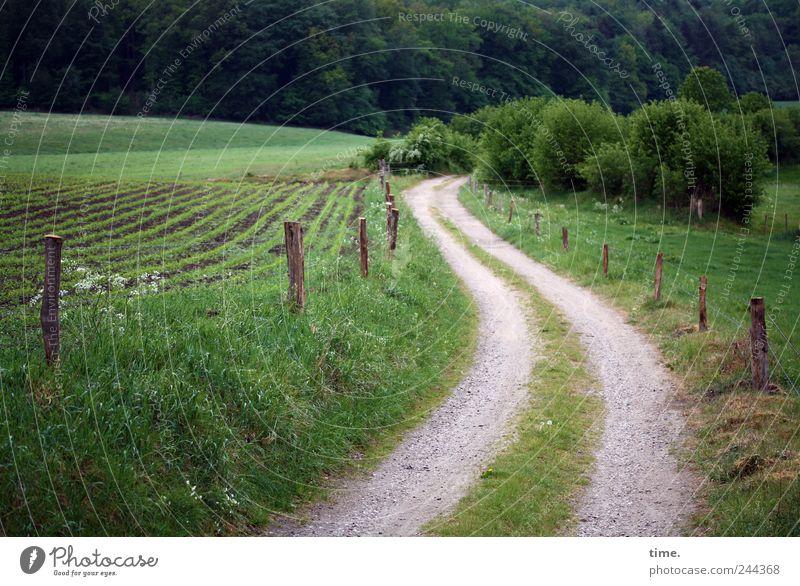 Lifelines #29 Agriculture Forestry Bushes Field Lanes & trails Esthetic Contentment Movement Eternity Friendship Emotions Serene Joie de vivre (Vitality) Luxury