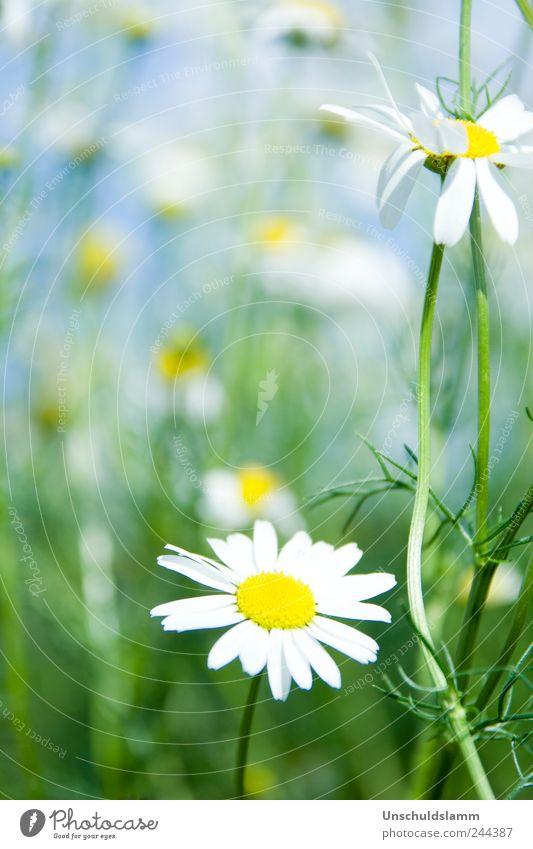Nature Blue White Green Plant Summer Flower Colour Environment Life Meadow Spring Garden Blossom Natural Fresh