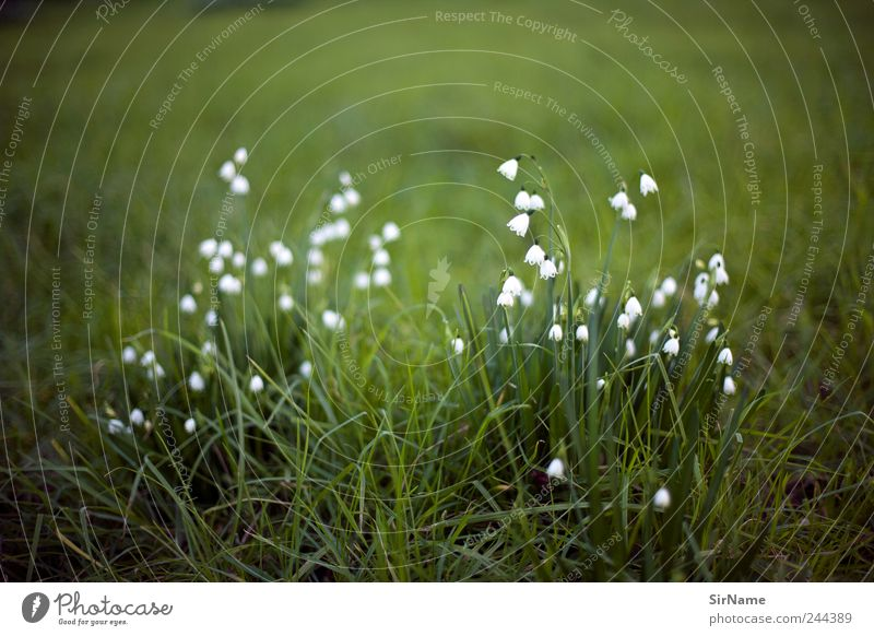 Nature Plant Flower Landscape Leaf Calm Environment Meadow Grass Blossom Moody Park Wild Growth Hiking Esthetic