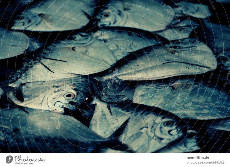 Ocean Fish Fish Cooking & Baking Fishery Seafood Media Animal Food Fish market Cookbook Dorade Fish roll Overfishing
