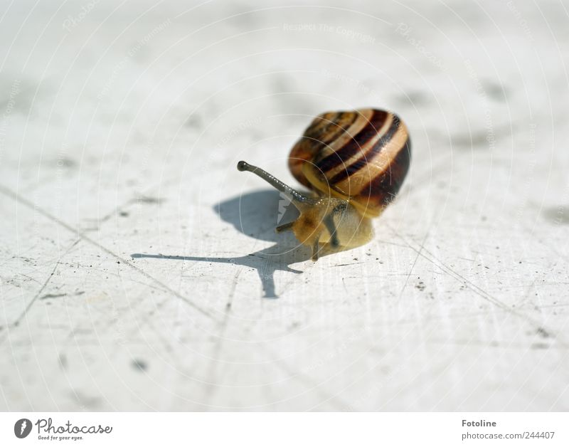 Nature Summer Animal Bright Environment Natural Wild animal Snail Crawl Feeler Slimy Snail shell