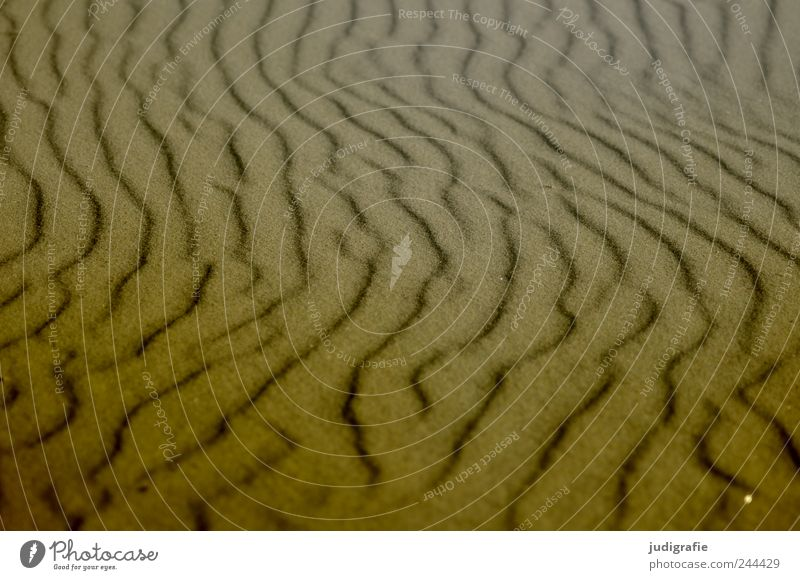 beach shapes Environment Nature Landscape Sand Coast Beach Baltic Sea Ocean Natural Warmth Soft Structures and shapes Undulation Colour photo Subdued colour