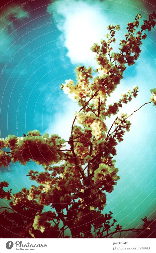 green tree Blossoming Green Yellow Clouds Branch Blue sky x-processed Cross processing False coloured looking up Above