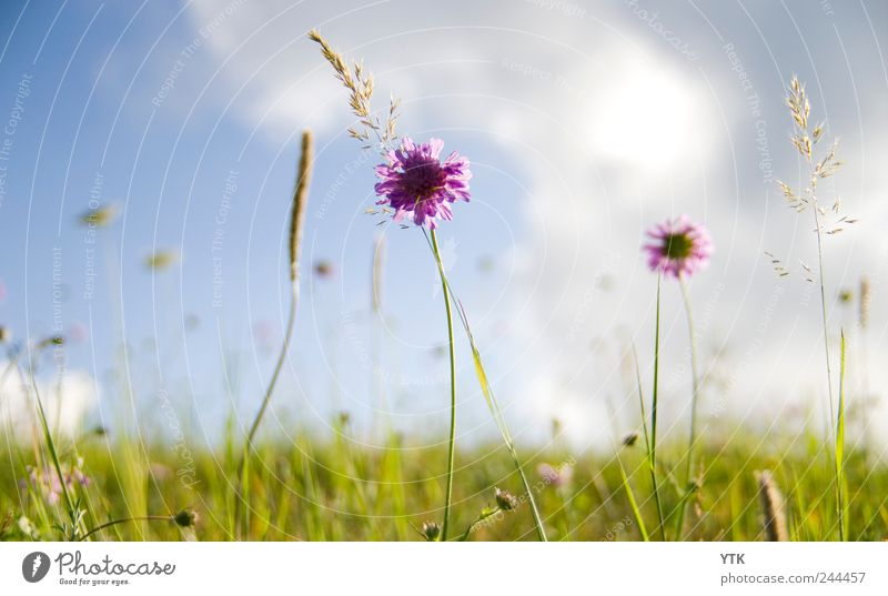 Sky Nature Green Plant Summer Flower Leaf Clouds Meadow Environment Landscape Grass Movement Blossom Bright Wind